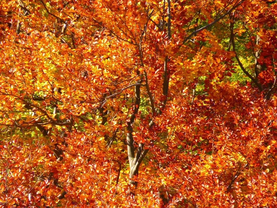 Autumn Equinox - happy or SAD?