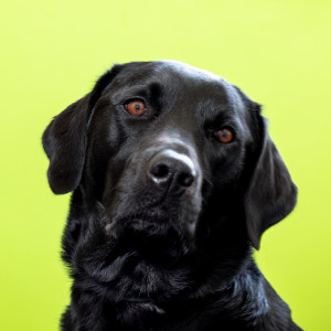 Bruce - Top Dog at Dovetail Recruitment